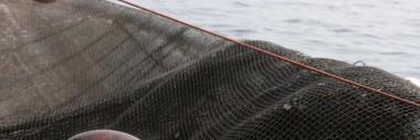 Kansainvälinen kalatalous